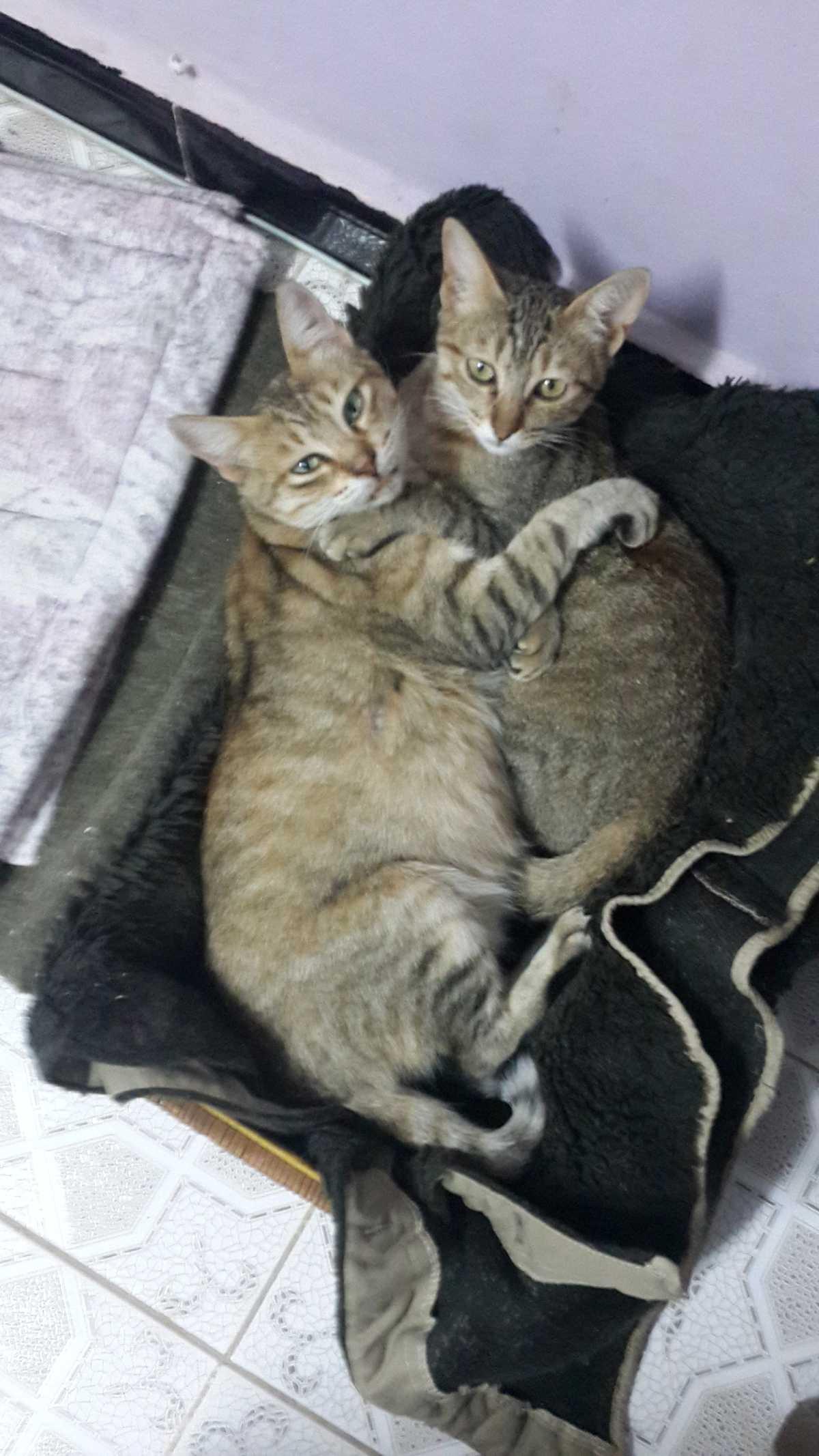 chats Minka et Juliette (mère et fille).